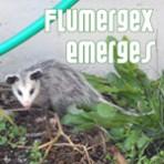 Flumergex Emerges